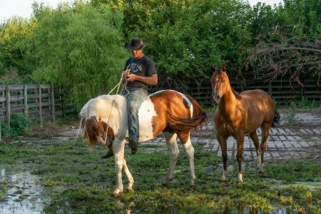 """Cattleman Jay Lewis sits atop his horse, Hell Paint, as he prepares to go track down a lose cow at the Oklahoma National Stockyards. """"My horse's name is Hell Paint. He gives me hell and he's a paint horse,"""" Lewis said.(Tilly Marlatt/ News21)"""